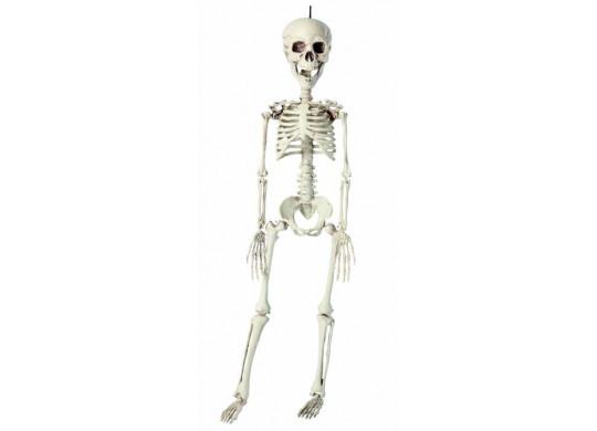 Squelette plastique 40cms